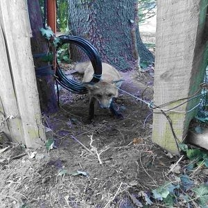 BuxMont-Wildlife-Trapping & Animal-Removal