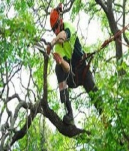 Tampa Tree Service Experts